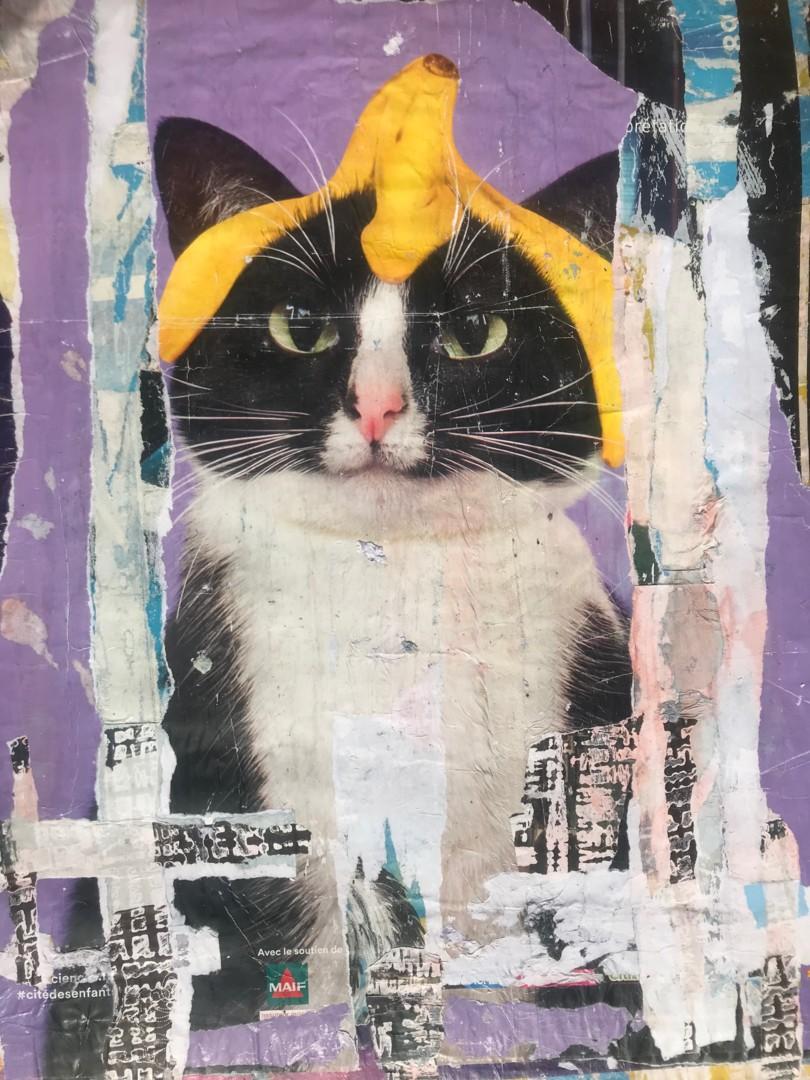 Dom (K) - Ceci n'est pas un chat avec une banane sur la tête !
